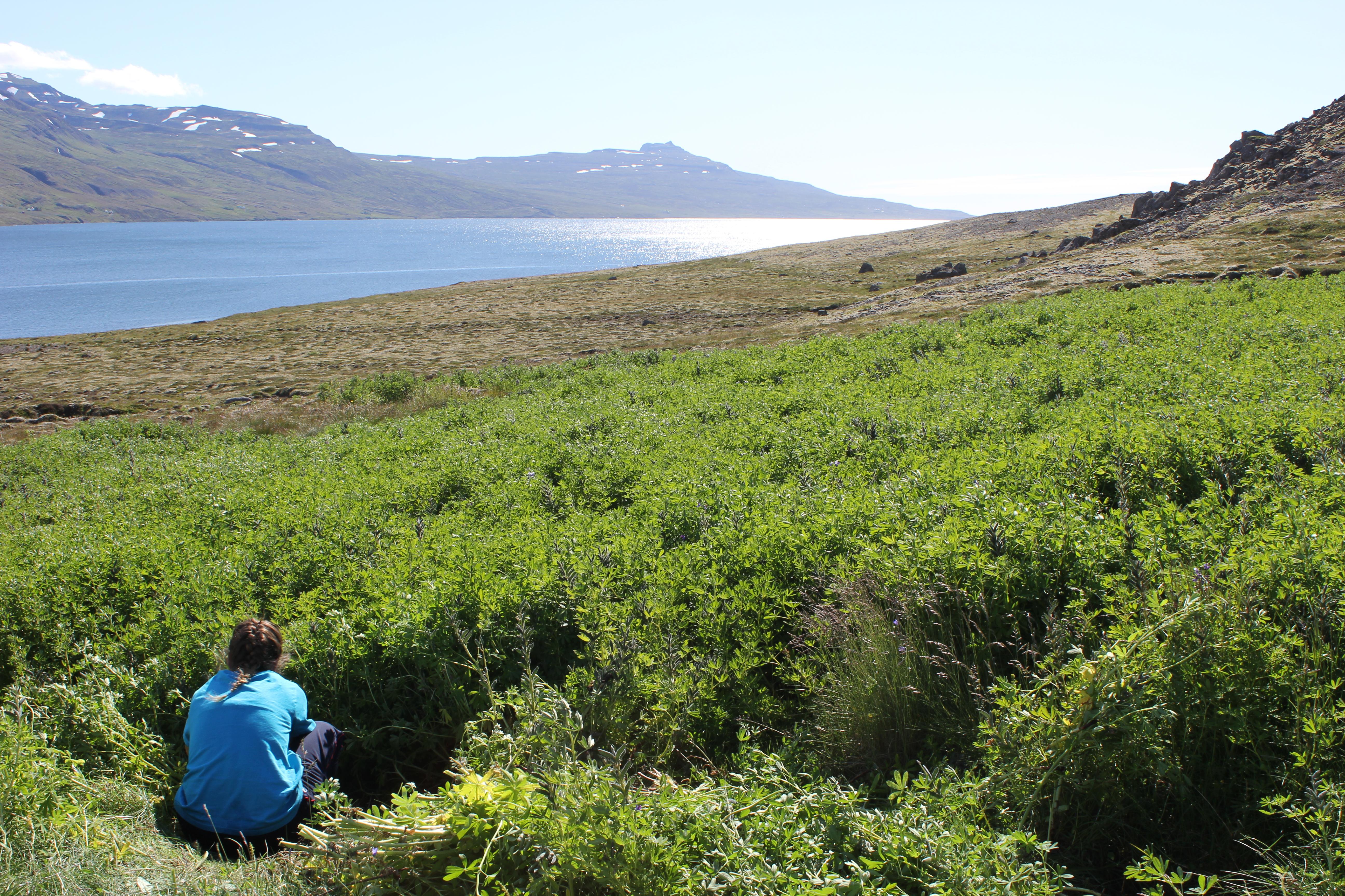 Eskifjordur